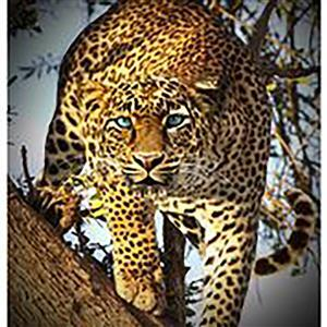 Hoffman Call Of The Wild Leopard 0.83m Panel